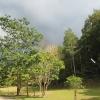 После дождя в джунглях. Парк Кхао Яй. Таиланд.