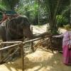 Таиланд. Пхукет. Катание на слонах.
