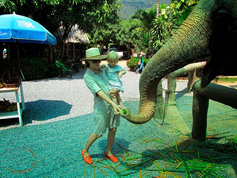 Самуи. Путеводитель. Что посмотреть. Ферма слонов. Кормим слоников. Катание на слонах.