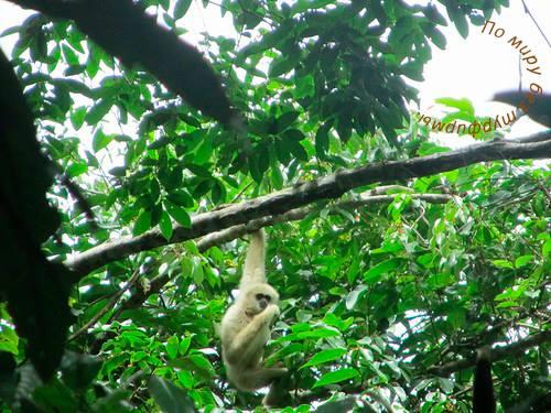 Таиланд. Путеводитель. Национальный парк Кхао Яй. Обезьяны. Лемуры.