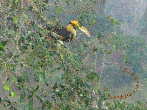Таиланд. Путеводитель. Национальный парк Кхао Яй. Тукан. Птицы.