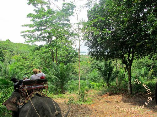 Таиланд. Путеводитель. Пхукет. Что посмотреть. Катание на слонах по джунглям.