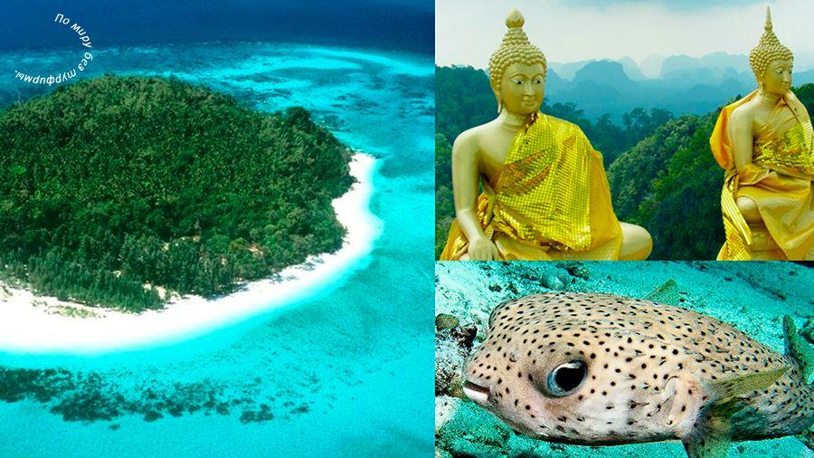 тур на море без визы,Таиланд Паттайя горящие туры,дешевые туры без визы, туры выходного дня за границу без визы.