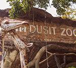 Зоопарк Дусит — душевное недорогое развлечение в Бангкоке для детей и взрослых
