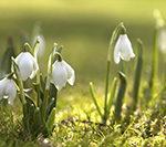 Spring — любимый промо код весны на скидку. Сегодня — на отели и на автобусы по Европе.
