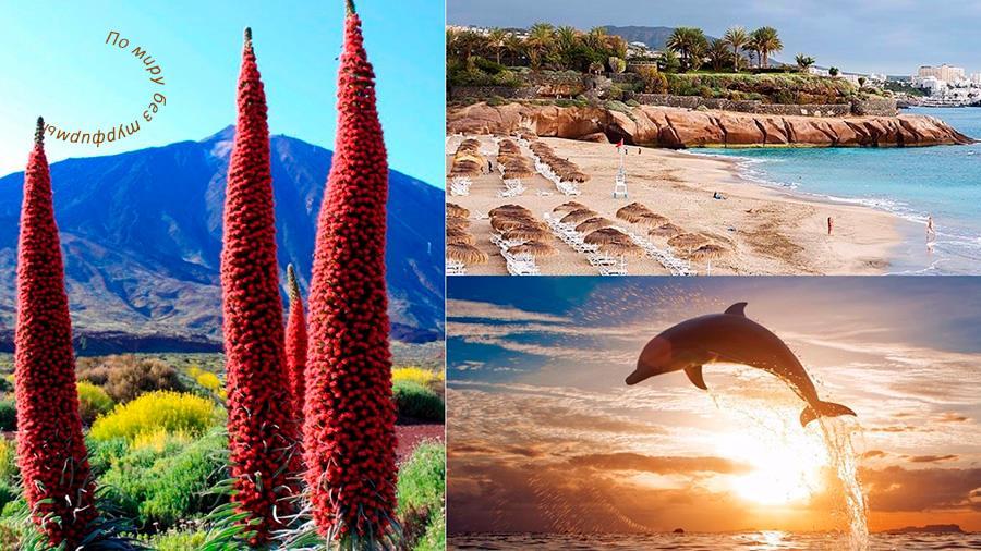 Отдых на Тенерифе с детьми, курорты Тенерифе, жилье на Тенерифе, лучшие пляжи Тенерифе