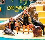 Тенерифе с детьми. Лоро парк (продолжение)-шоу животных, рестораны, карта, сервис…