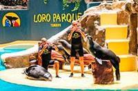 Лоро парк Тенерифе с детьми отзывы, Лоро парк официальный сайт, Лоро парк билеты, развлечения на Тенерифе