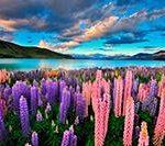 Виза в Новую Зеландию для россиян по-новому. Ждем перемен! Строим маршруты!