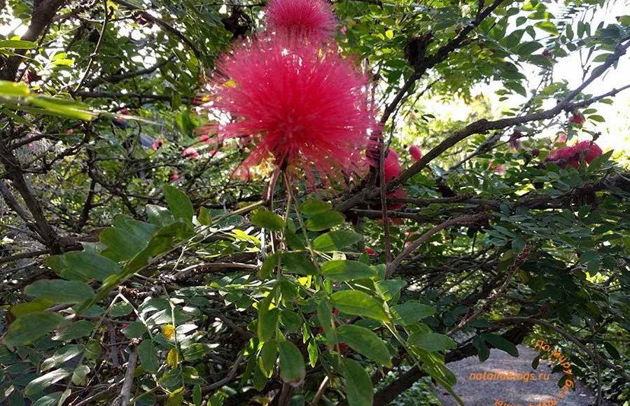 достопримечательности Тенерифе (Канарские острова). Ботанический сад Пуэрто де ла Круз