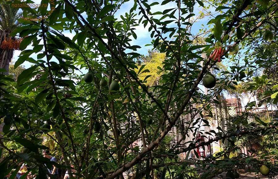 достопримечательности Тенерифе Канарские острова, Тенерифе Канарские достопримечательности,Пуэрто де ла Круз Тенерифе, ботанический сад Пуэрто де ла Крус достопримечательности
