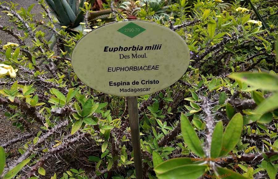 остров Тенерифе достопримечательности на карте, ботанический сад Тенерифе, достопримечательности Тенерифе на карте на русском