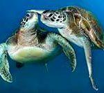 Морские экскурсии на Тенерифе. Дельфины, киты, черепахи. Цены. Плюс наш отчет и отзыв.