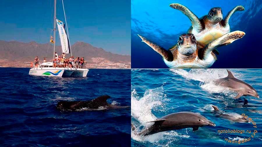 индивидуальные экскурсии на Тенерифе цены 2017, экскурсии на Тенерифе на русском языке, развлечения на Тенерифе, дельфины, киты, морские прогулки