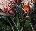Остров Тенерифе. Достопримечательности. Ботанический сад Пуэрто де ла Крус Jardín de Aclimatación de la Orotava
