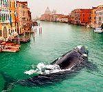Экскурсионные туры по Италии? Венеция? Рим? Флоренция? Как добраться самостоятельно?