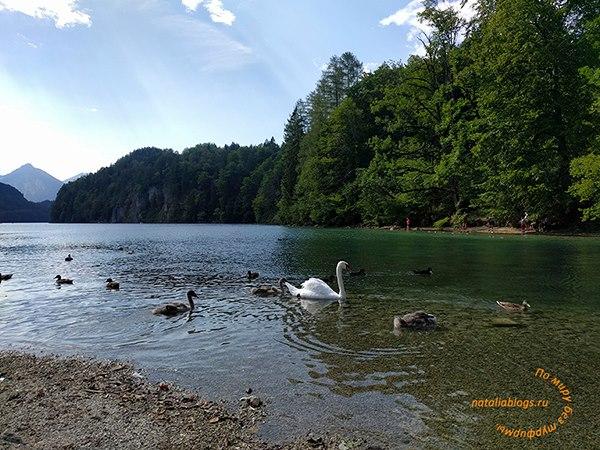 Лебединый замок Нойшванштайн. Озеро Альпзее