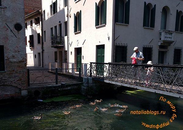 Маленькая Венеция. Город Тревизо. Венето. Италия