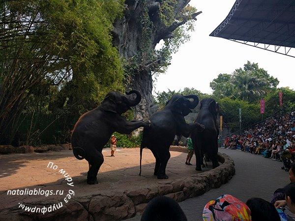 Сафари парк в Бангкоке. Экскурсия - цена - купить билеты на шоу слонов