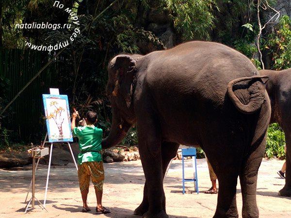 Сафари в Бангкоке отзывы. Шоу слонов