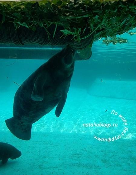 Купить билеты в Сафари парк Бангкок. Морская корова