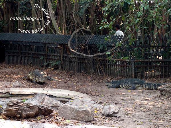Бангкок. Мир Сафари. Отзывы. Крокодилы