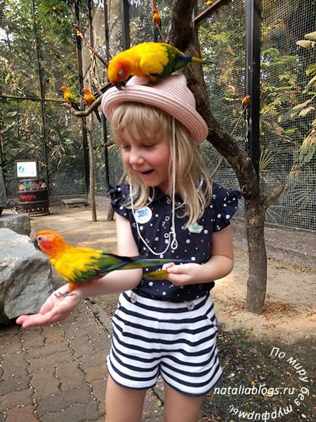 Подробный отзыв про экскурсию в зоопарк Safari World в Бангкоке. Кормление попугаев