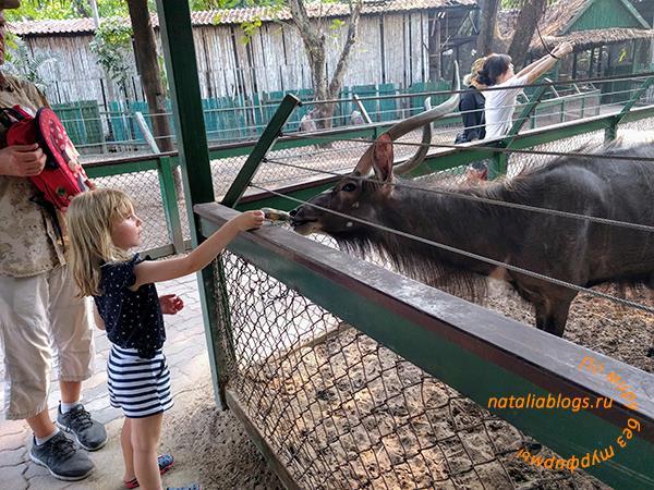 """Наш отзыв о Марина парк в зоопарке """"Мир сафари"""" в Бангкоке"""