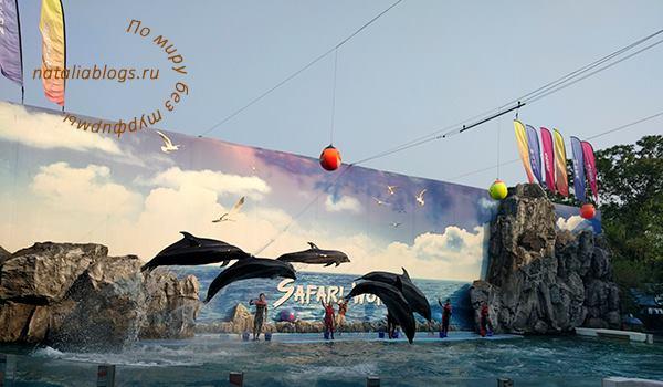 Шоу дельфинов в зоопарке Бангкока Сафари ворд