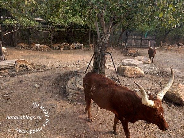 Safari World Бангкок - как добраться