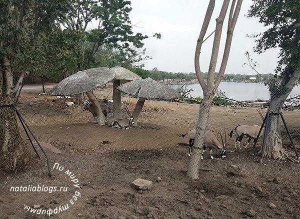 Зоопарк в Бангкоке Safari World