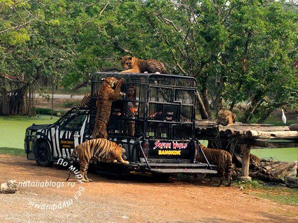 """Экскурсия """"сафари"""" в Бангкоке - отзывы. Кормление тигров"""