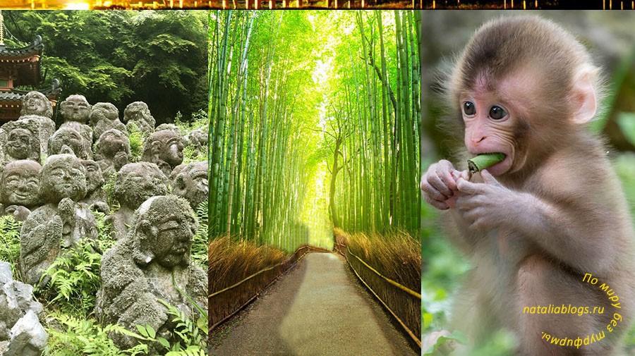 бамбуковый лес Киото (Арашияма / Япония)