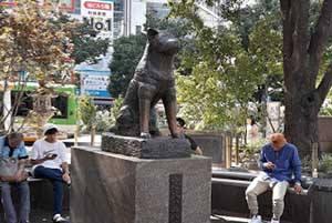 Сибуя/ Токио. Памятник Хатико