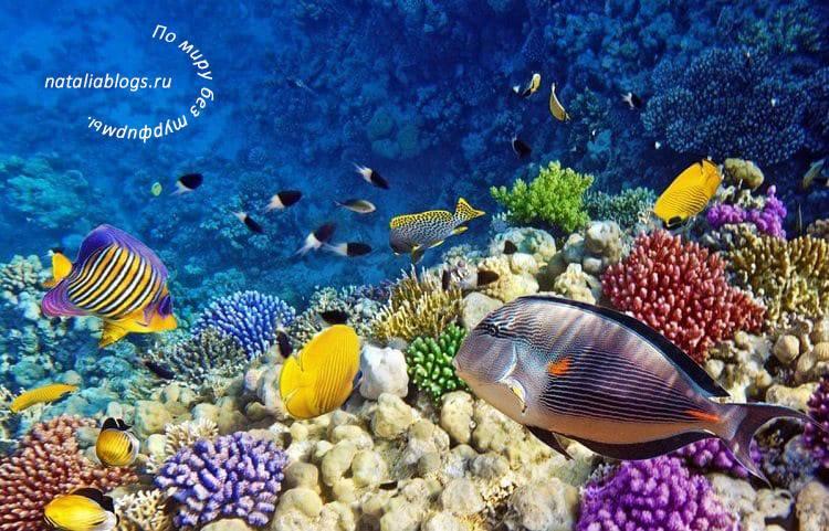 куда лучше лететь в Таиланд в марте с детьми, где чистое море